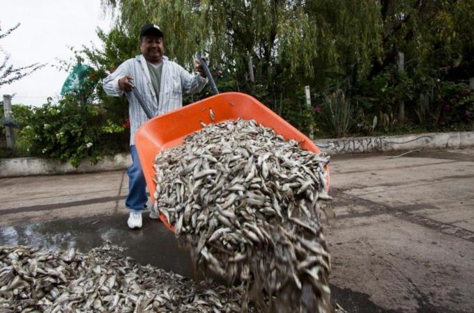 Mexico investigates mass fish death in lagoon